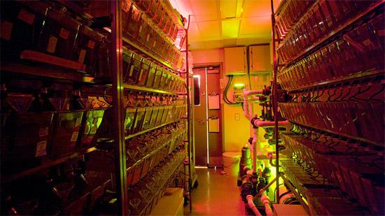 Burgess Laboratory, Genomics, NIH, Bethesda, MD