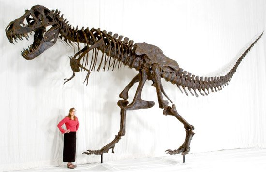 T. rex Replica Skeleton