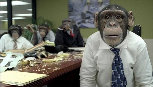 Sentient Chimps