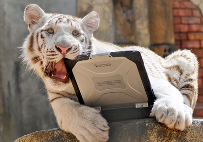 Toughbook vs. Tiger