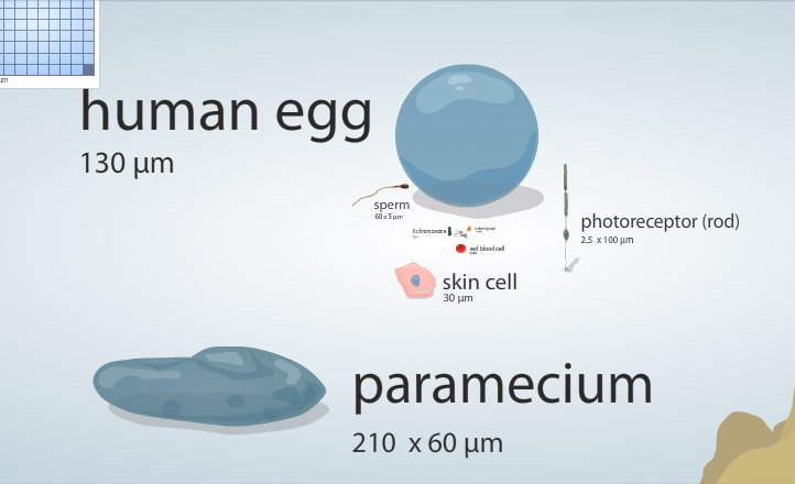 Site: Cell Size And Scale