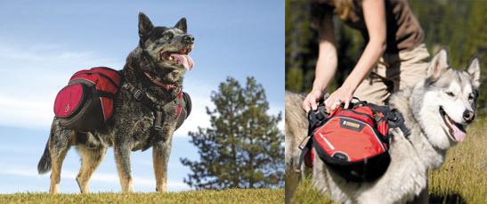 Palisades Dog Pack