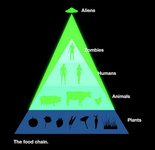 The Real Food Chain