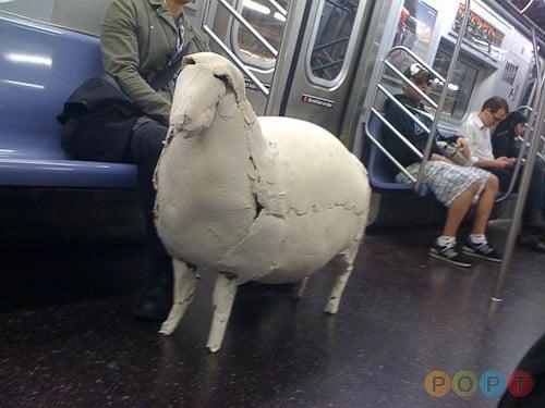 People of Public Transit