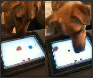 Dog + iPad + Air Hockey