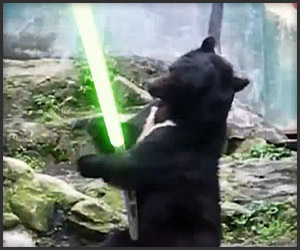 Kung Fu Bear Finds a Lightsaber