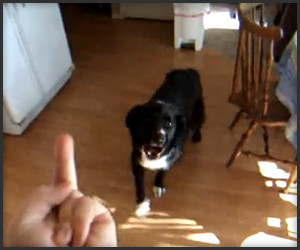 Dog Flips Out When Flipped Off