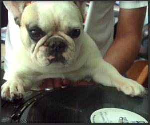 Turntable Dog