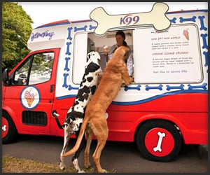 Dog Ice Cream Truck