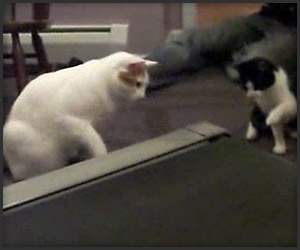 Cats vs. Treadmill