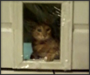 Cat Door Prank