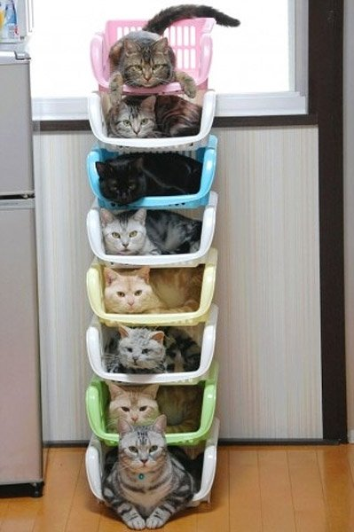 How To Store & Organize Cats