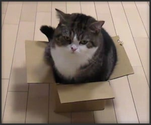 Maru Doesn't Fit