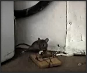 How Not to Catch a Mouse