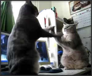 Kitty High-Fives