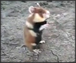 Don't Mess with this Hamster