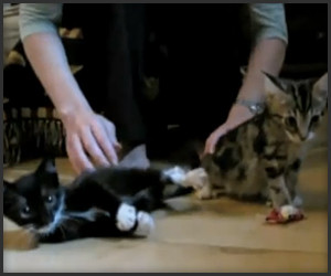 Fainting Kittens: A Tribute