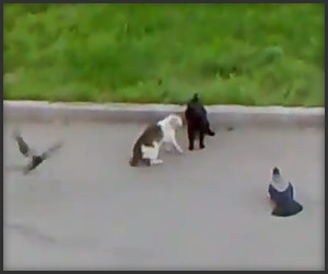 Cats and Birds Street Fight