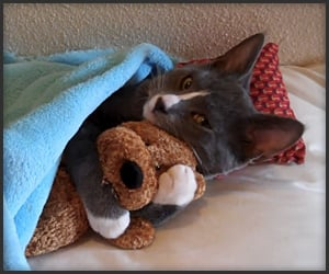 Kitten Loves Teddy Bear