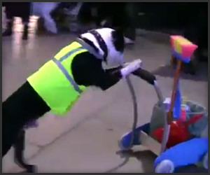 Dog Janitors