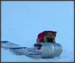 (Doggie) Grand Theft Sled