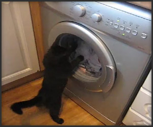 Cat vs. Washing Machine