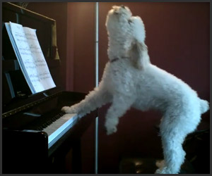 Keyboard Dog