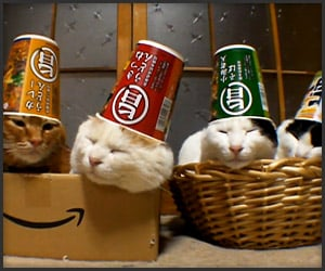 Four Cats, Four Cups