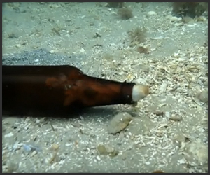 Beer Bottle Octopus