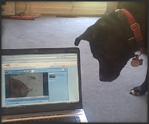 Technology Confounds Dog