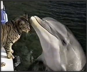 Cat Plays With Dolphins