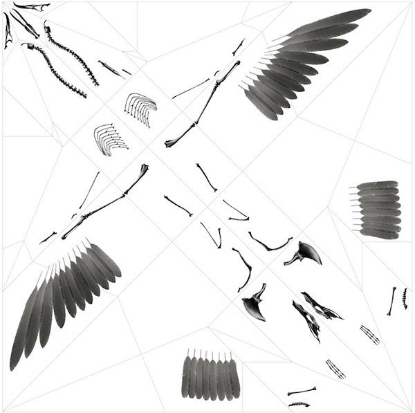 X-Ray Origami