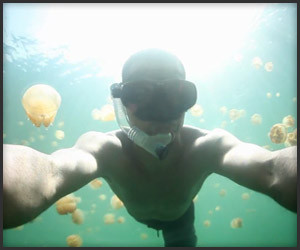 Swimming with Jellyfish