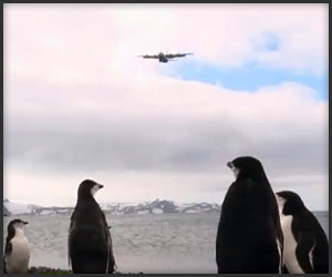 Penguins vs. Airplanes