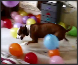 Bunk vs. Balloons
