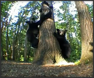 Magi-Cam and the Bears