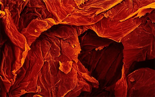 Sun-Dried Tomato - 250x Magnification
