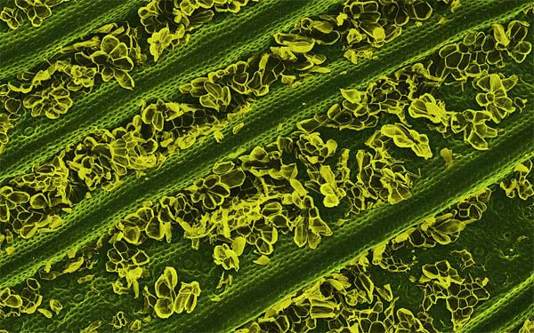Electron Microscope Food