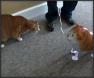 Cat vs. Cat Balloon