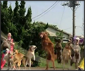 13 Dogs and a Jump Rope