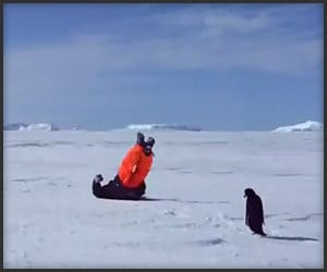 When Penguins Attack