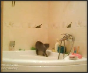 Cat Crosses Bathtub