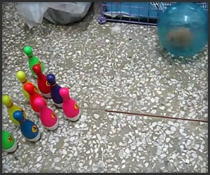 Hamster Bowling