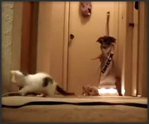 Kittens vs. Vacuum Cleaner