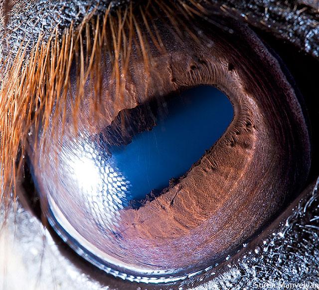 Animal Eyes Up Close