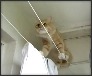 Tightrope Cat