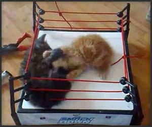 WWE Kitten SmackDown