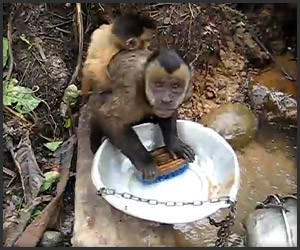 Monkey Dishwasher
