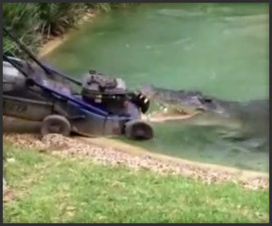 Crocodile vs. Lawnmower