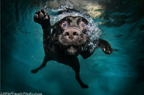 Underwater Dogs The Awesomer